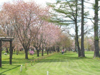 清見ヶ丘公園(桜・パークゴルフ・青翔亭)